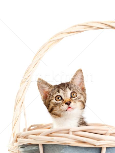 Kitten Stock photo © ShawnHempel