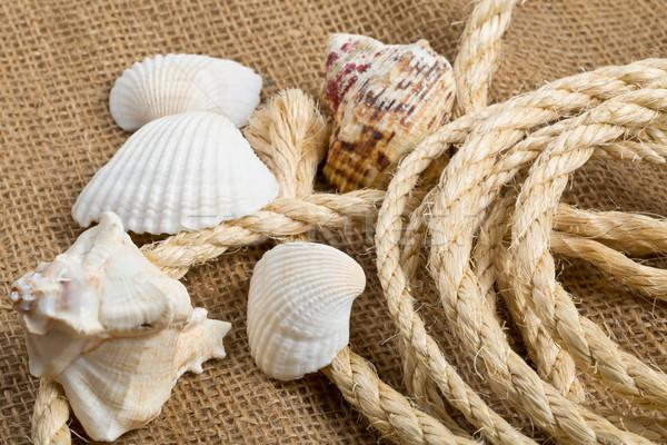Conchas corda marrom pano de saco pano férias Foto stock © ShawnHempel
