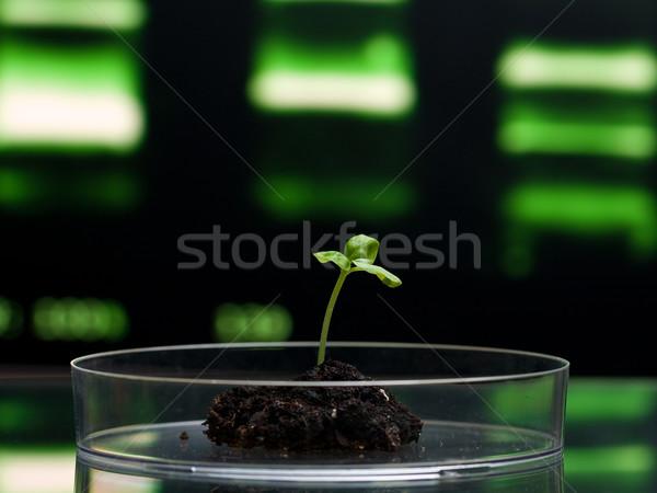 Biotechnologie research Stock photo © ShawnHempel