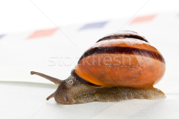 Snail mail Stock photo © ShawnHempel