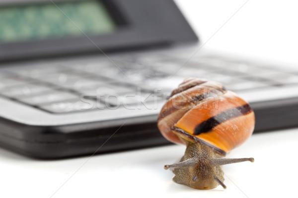 Lassú pénzügy csiga számológép fehér üzlet Stock fotó © ShawnHempel