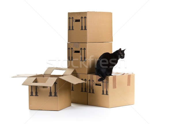 Cat with moving carton boxes stack Stock photo © ShawnHempel