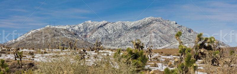 Mojave desert Stock photo © ShawnHempel