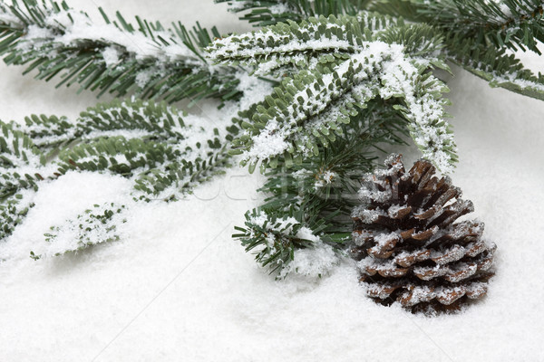 Kış koni şube kar Noel Stok fotoğraf © ShawnHempel