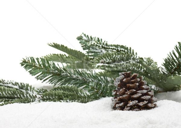 Zimą jodła stożek oddziału śniegu christmas Zdjęcia stock © ShawnHempel
