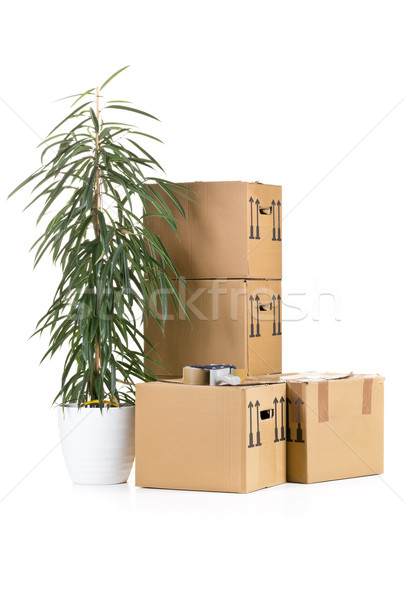 Moving carton boxes stack with plant Stock photo © ShawnHempel