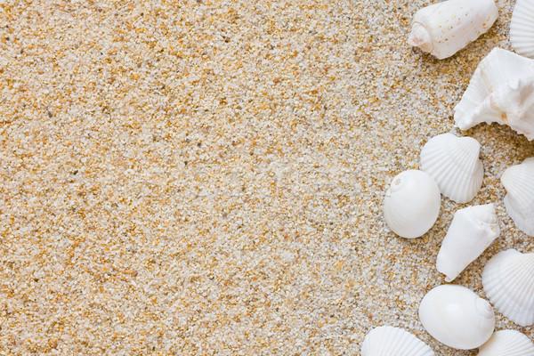 ビーチ 海浜砂 海 シェル テクスチャ 自然 ストックフォト © ShawnHempel