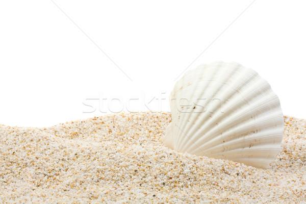 Sea shell on the beach Stock photo © ShawnHempel