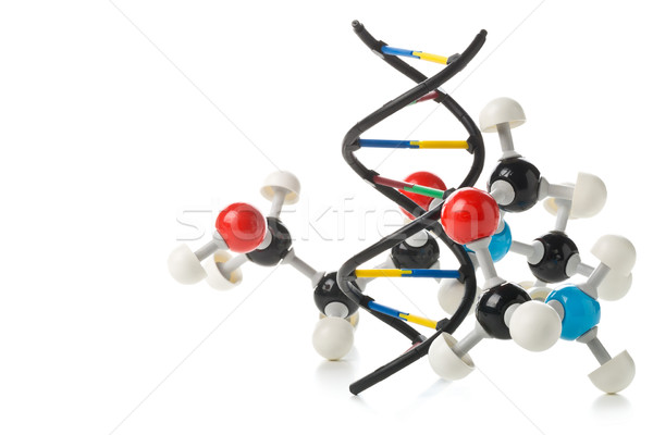Chemical molecule model and DNA structure model over white backg Stock photo © ShawnHempel