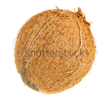 Whole coconut isolated Stock photo © ShawnHempel