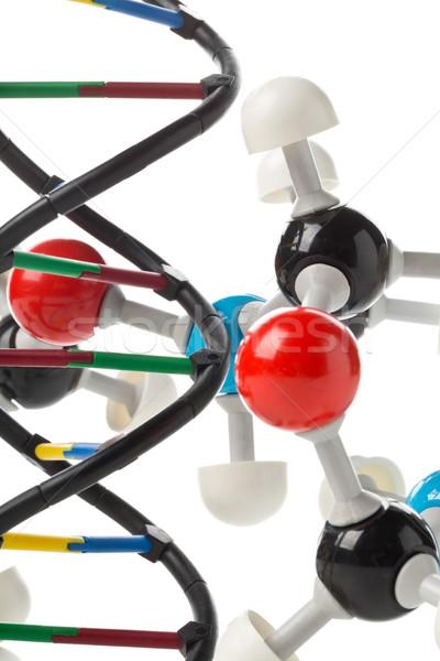 Сток-фото: химического · модель · ДНК · структуры · белый · науки