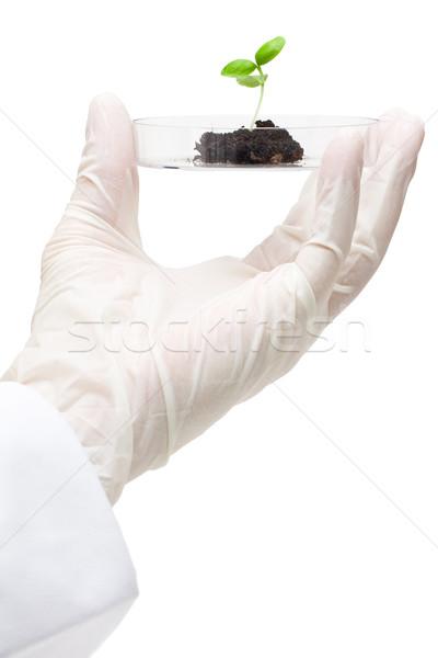 Biotecnologia pesquisa investigador planta espécime folha Foto stock © ShawnHempel
