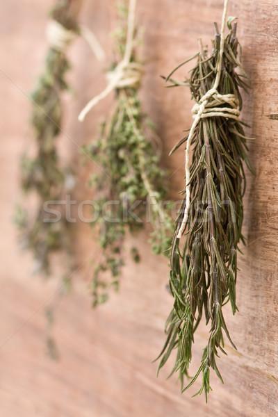Suszy zioła świeże herb inny wiszący Zdjęcia stock © ShawnHempel