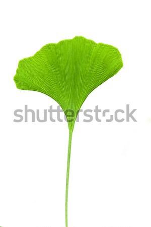 Stock photo: Ginkgo leaf