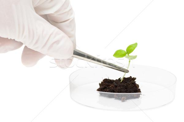 Biotecnologie ricerca ricercatore impianto campione foglia Foto d'archivio © ShawnHempel