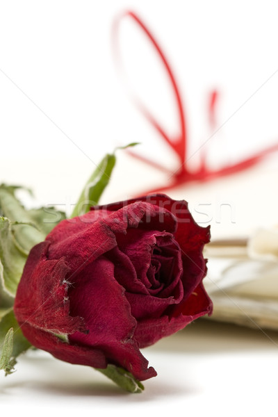 Sevmek harfler kırmızı gül seçici odak çiçek Stok fotoğraf © ShawnHempel