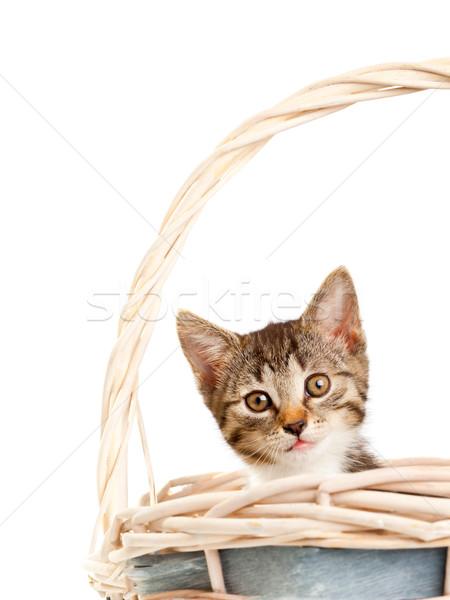 子猫 小さな 国内の 見える 外に バスケット ストックフォト © ShawnHempel