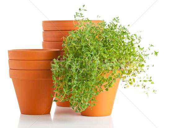 Roślin pusty zioła biały pomarańczowy Zdjęcia stock © ShawnHempel