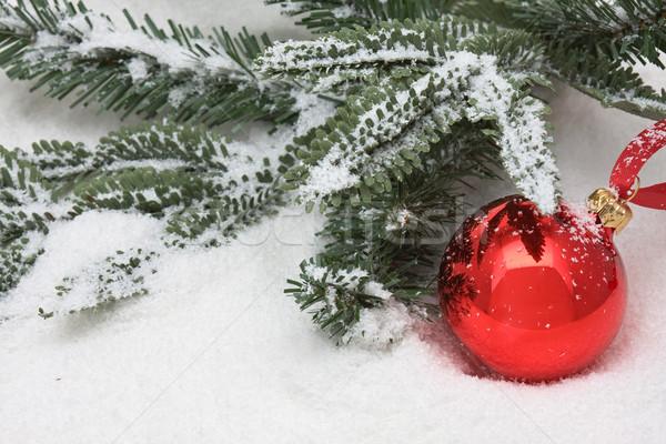 Noel önemsiz şey kırmızı şube kar kış Stok fotoğraf © ShawnHempel