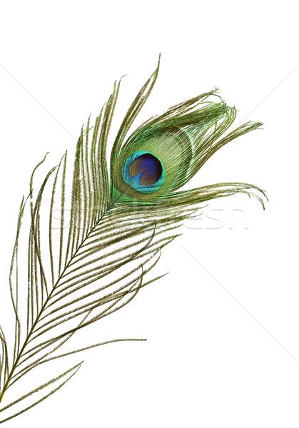 Stok fotoğraf: Tavuskuşu · tüy · renkli · detay · yalıtılmış · beyaz