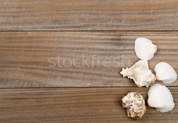 Seashells on brown wooden boards  Stock photo © ShawnHempel