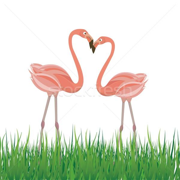 Dois flamingo amor rosa flor grama Foto stock © shekoru