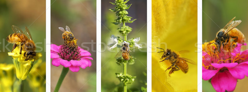 Panoramic nature bee montage background   Stock photo © sherjaca