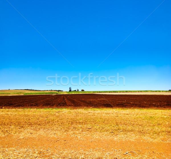 Coltivato campo farm agricoltura cielo blu cielo Foto d'archivio © sherjaca