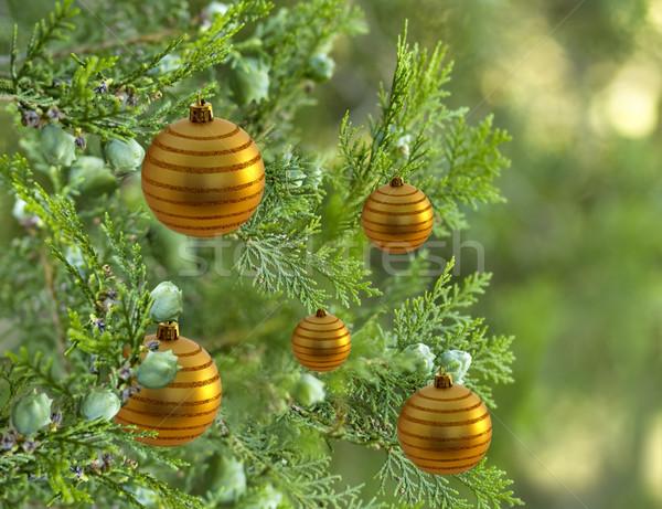 Noel ağacı çam ağacı dekore edilmiş altın önemsiz şey Stok fotoğraf © sherjaca