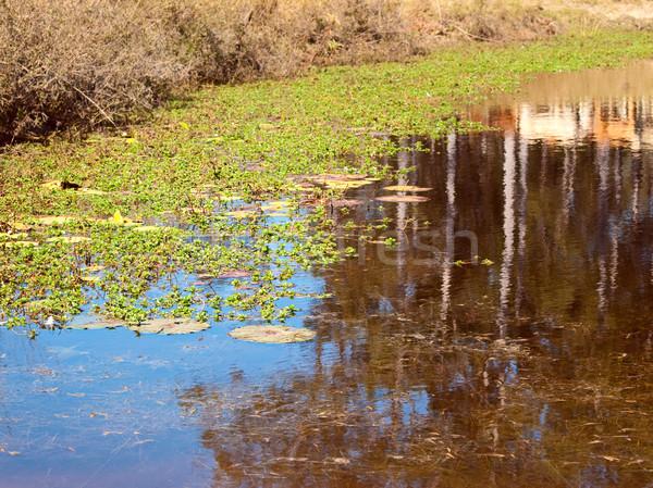 Gum tree reflection on outback  billabong Stock photo © sherjaca