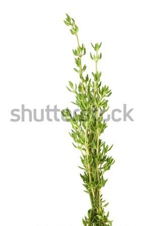 свежие травы изолированный белый здорового Сток-фото © sherjaca