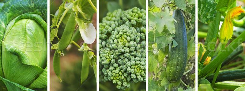 свежие зеленый растительное баннер панорамный здорового Сток-фото © sherjaca