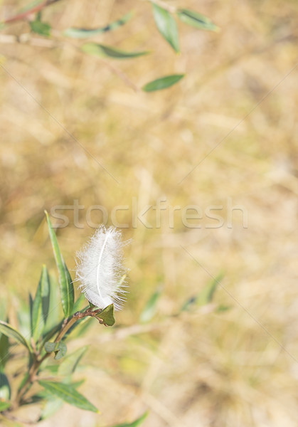 White downy fluffy feather in peaceful scene Stock photo © sherjaca