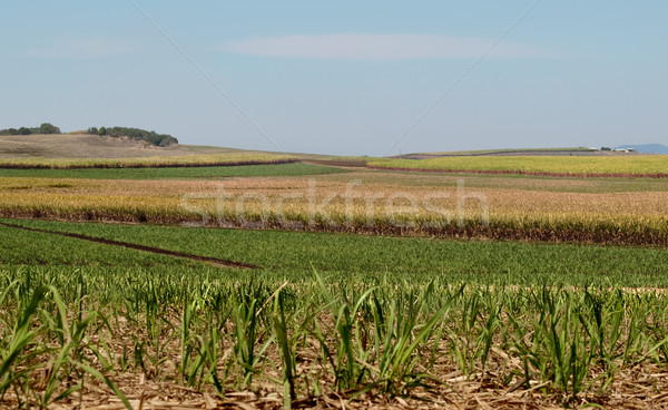 Australian sugar industry sugarcane farm agriculture landscape Stock photo © sherjaca