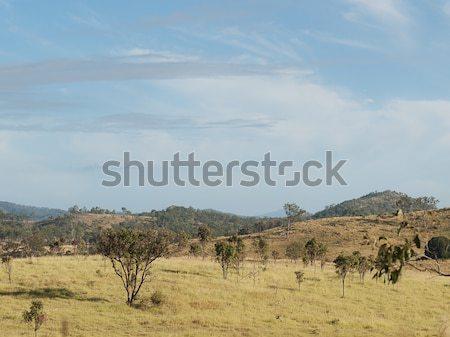 Rural Queensland Australia Stock photo © sherjaca