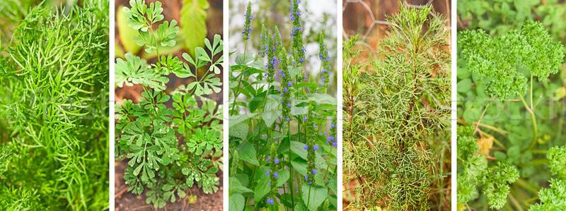Afiş ayarlamak organik bahçe otlar panoramik Stok fotoğraf © sherjaca