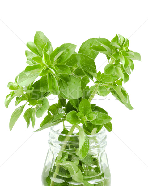fresh organic herbs basil sprig in a jar Stock photo © sherjaca