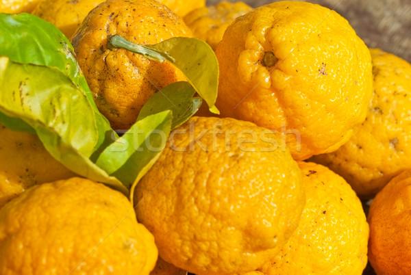 Wild Australian Native Bush Lemons Stock photo © sherjaca
