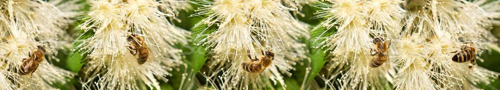Bahar arılar beyaz çiçekler sınır Stok fotoğraf © sherjaca