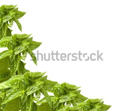 Fesleğen sınır beyaz organik yeşil otlar Stok fotoğraf © sherjaca