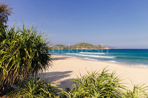 wild picturesque beach Stock photo © shevtsovy