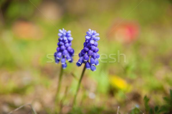 Primer plano flores textura primavera verde azul Foto stock © shihina