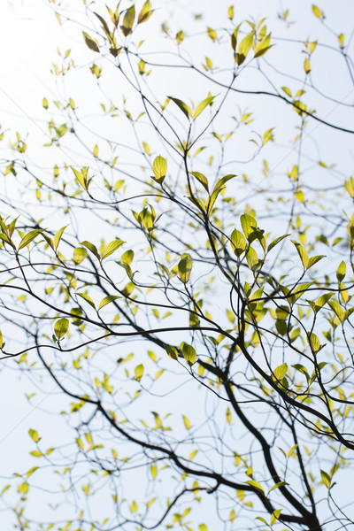 Foto stock: Frescos · hojas · Florida · sol · naturaleza