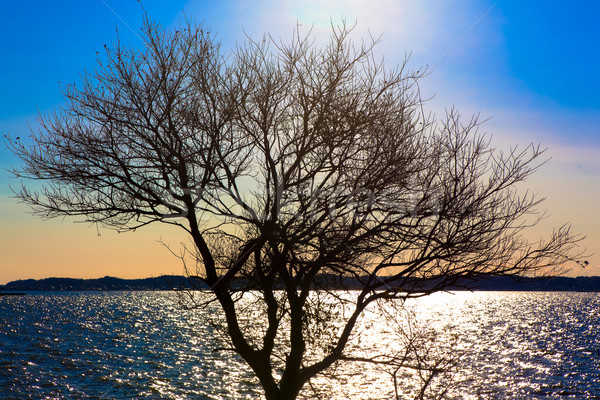 Brillante sol árbol invierno cielo sol Foto stock © shihina