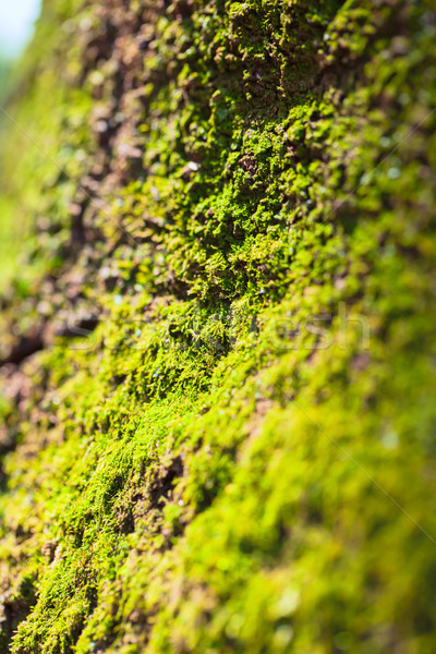 Green moss texture Stock photo © shihina