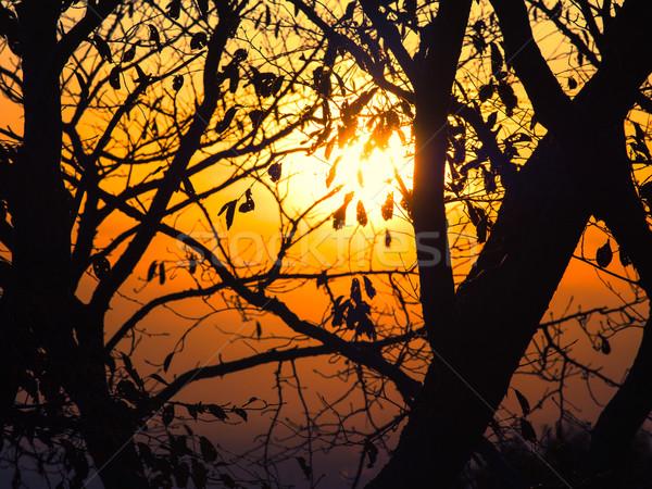 Foto stock: Siluetas · hojas · puesta · de · sol · brillo · sol · resumen