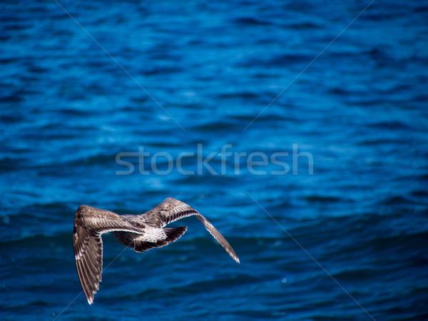 戻る 飛行 海岸 行 太陽 海 ストックフォト © shihina