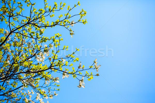 Florida cielo azul naturaleza belleza hojas Foto stock © shihina