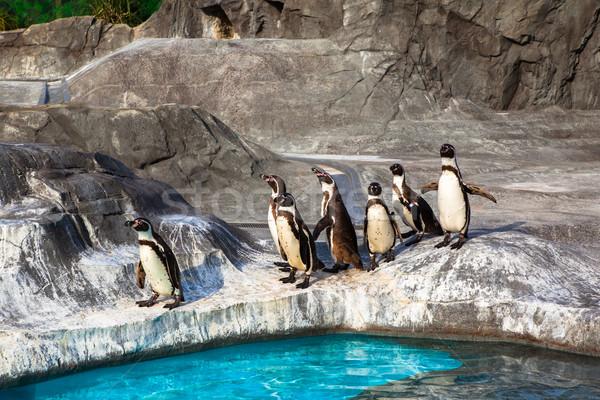 Cute zoológico Japón agua aves piscina Foto stock © shihina