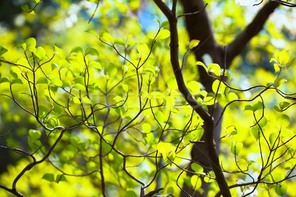 明るい 葉 フロリダ 自然 背景 ストックフォト © shihina
